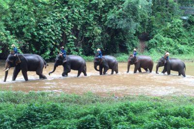 CHIANG DAO ELEPHANT TRAINING