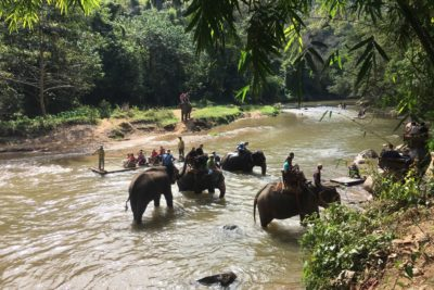 Elephant riding bamboo rafting tour