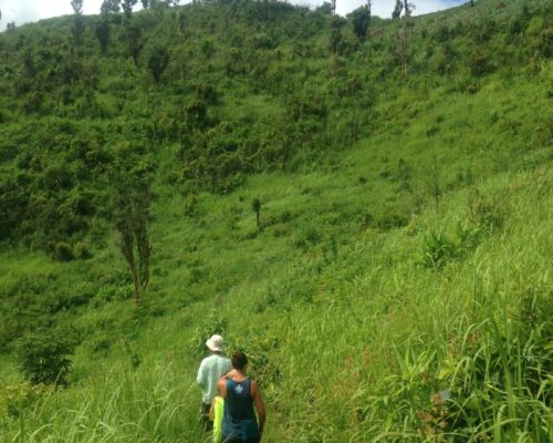 1 DAY TREKKING ONLY MOUNTAIN HIKING