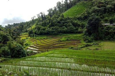 3 Day Trekking Mae Taeng