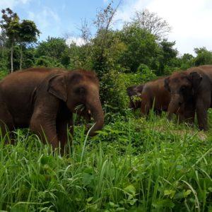 CHIANG MAI ELEPHANT RESCUE PARK