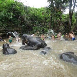 chiang mai jungle sanctuary