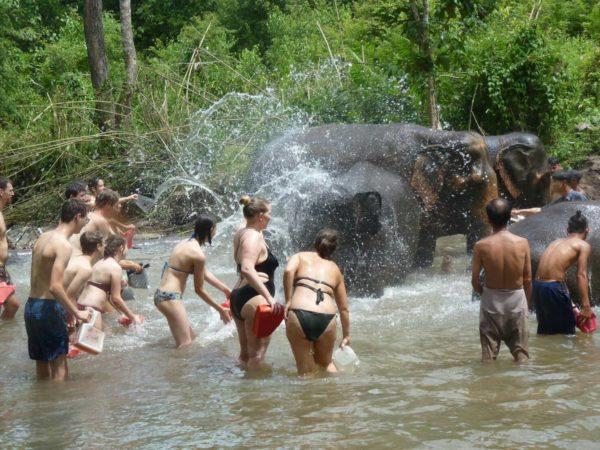 2 days chiang mai elephant sanctuary & trekking